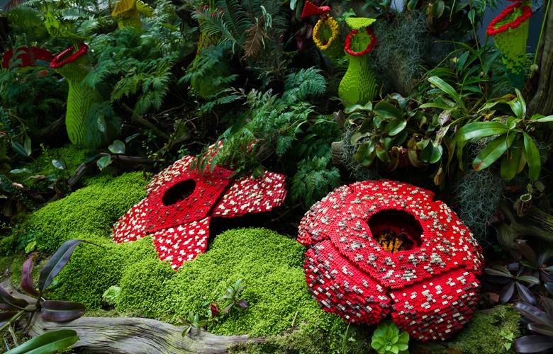 Rafflesia arnoldii: Doodle για το μεγαλύτερο λουλούδι του κόσμου!