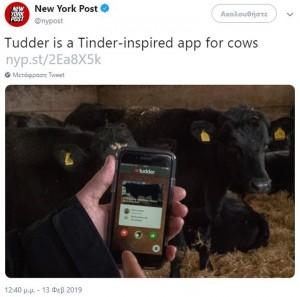 Tudder: Το «Tinder των αγελάδων» είναι γεγονός