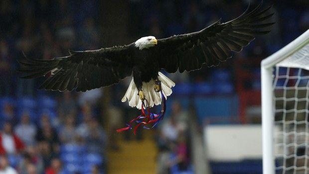 Κρίσταλ Πάλας: Πέθανε από ανακοπή καρδιάς ο αετός-μασκότ της ομάδας